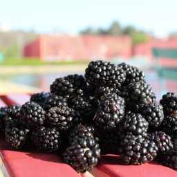 9 out of 10 blackberries grown in America come from Oregon. Here's why.